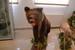 Muzeul Paul Taralunga-urs (7)