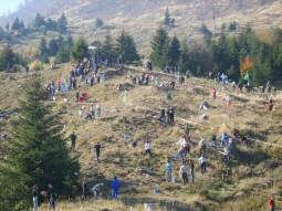 Romania prinde radacini 2008